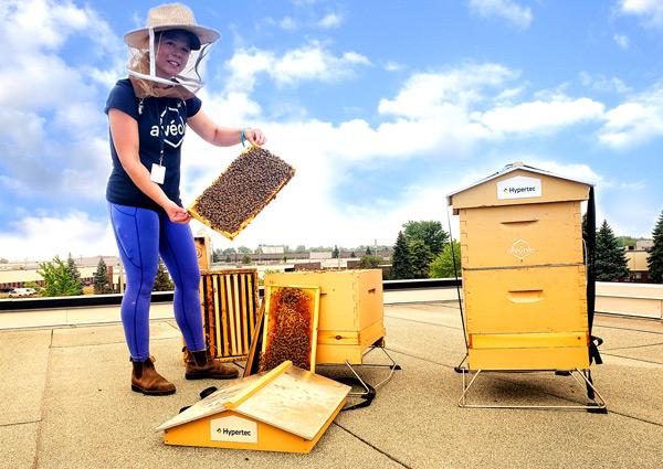 Hypertec Alvéole Bee Hive