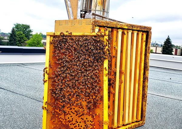 Hypertec Hive
